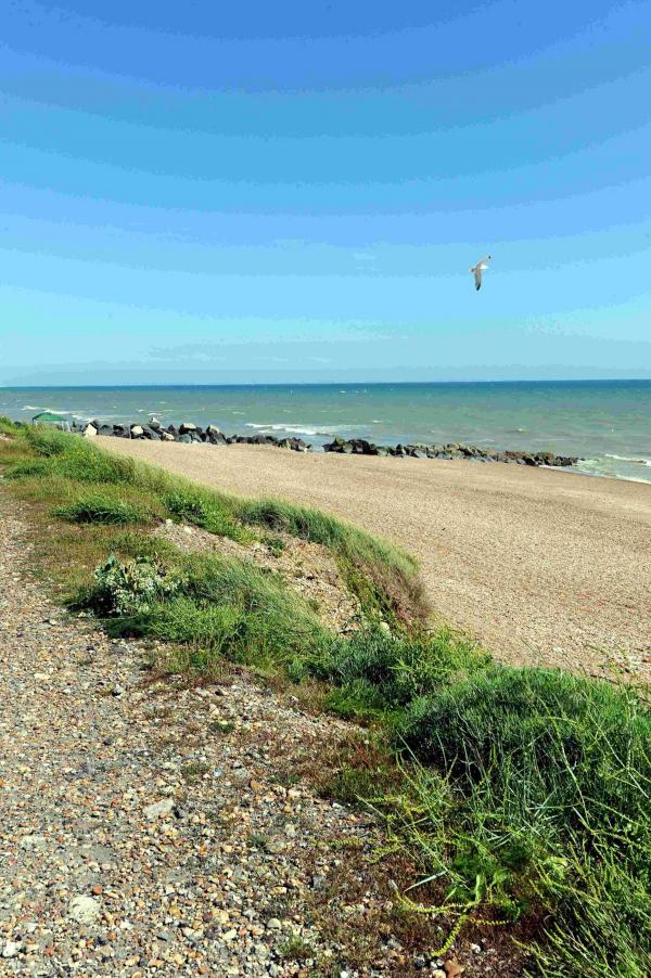 Shoreham Beach, where pickers were told not to pick sea kale as it is in a protected area