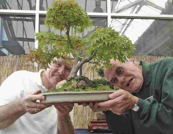 Ken Norman, president of Sussex Bonsai Group, with Mark Hillyard, South Downs Nurseries manager