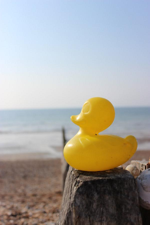 Mystery surrounds the arrival of hundreds of rubber ducks on a beach front