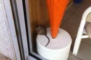 Customer's rat picture leads to company food hygiene fines