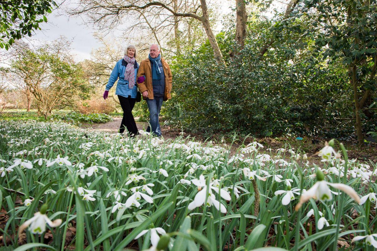 rhs curators give their favourite winter gardens to explore the
