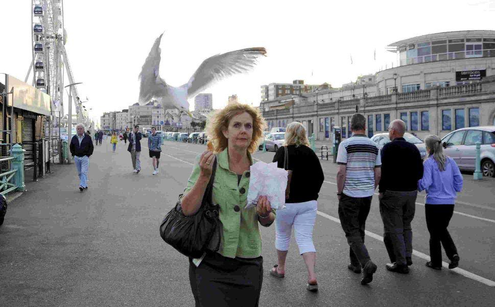 Government to spend £250k to help tackle urban seagull menace