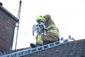 Firefighters drafted in to help rescue seagull trapped in netting