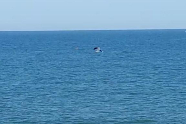 UPDATED: Dolphins spotted off the coast of Brighton, Hove and Shoreham