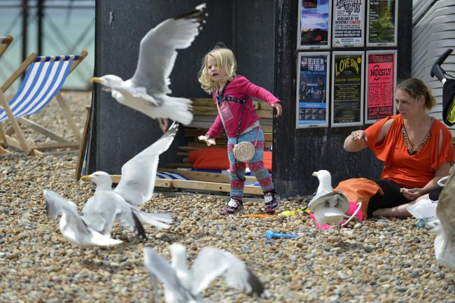 Seagulls swoop around a family on Brighton beach