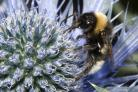 Ban on pesticide which affects bees