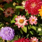 The Argus: Assorted flowers in a summer garden including chrysanthemums, daisies and dahlias