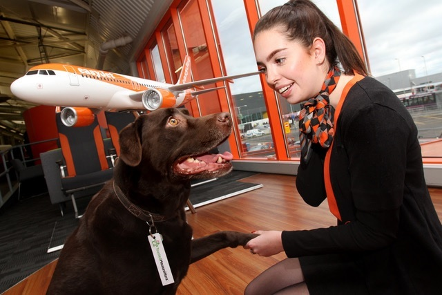A partnership between easyJet and TrustedHousesitters means that dogs like Coco can look forward to staying in the comfort of their own home with animal-loving house sitters who can stay for free, when booking flights on easyJet.com