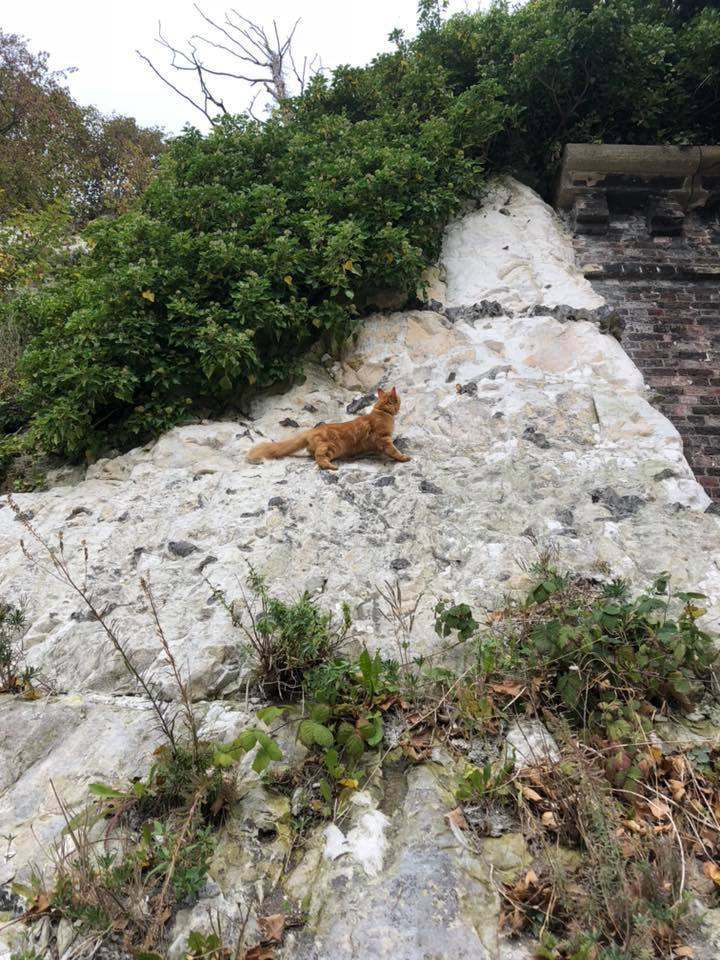Cat at old Kemp Town Train Tunnel