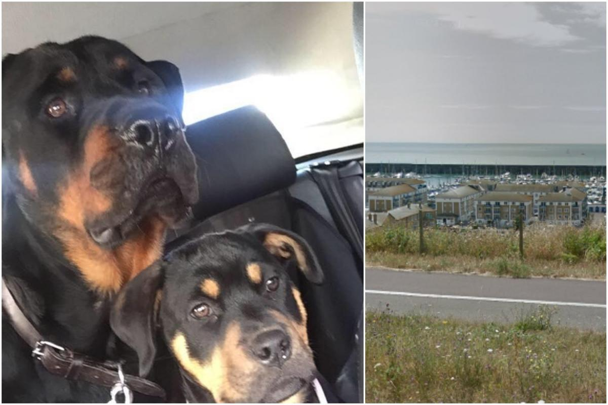 Out Of Control Rottweilers At Brighton Marina The Argus