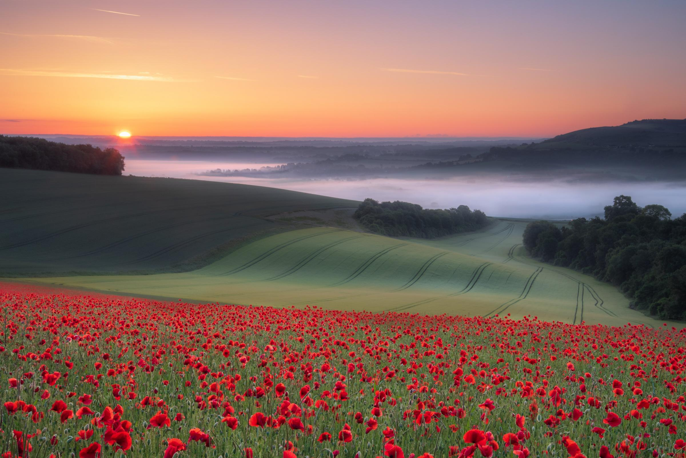Jamie Fielding's image of a poppy field, called South Downs Sunrise
