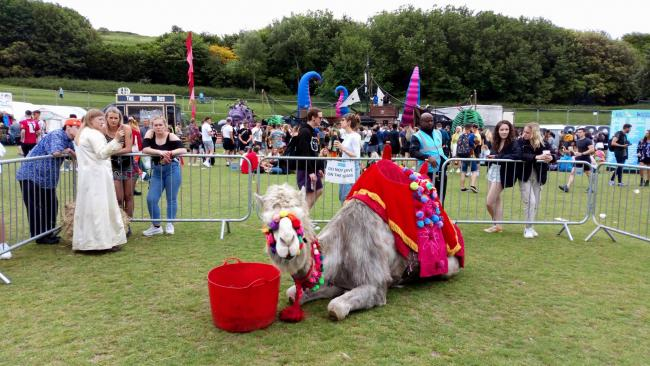 Owner says camel loves drum and bass at Brighton event | The